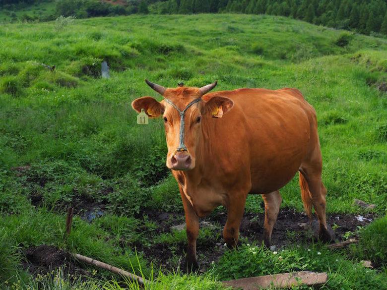 熊本あか牛